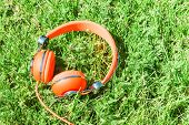 Bright Orange Colorful Headphones On Fresh Sward