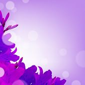 Violet Lilies, With Gradient Mesh, Vector Illustration