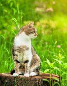 Sitting cat in green grass on stump
