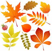 Autumn leaves icons over white background