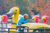 Swan Boats at Ueno Park in Tokyo