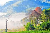 View Of Morning Mist At Doi Angkhang Mountain, Chiang Mai, Thailand