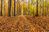 Path in the forest covered with dead leaves in fall colors