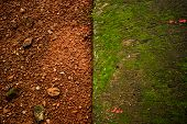 Red & green Natural footpath texture background