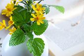 lemon balm and marigold