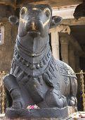 Statue Of Nandi The Bull At Thiruvannamalai Temple.