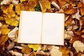 Vintage Book On Autumn Leaves Background
