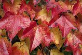 Autumn leaves in fantastic colors as a background