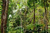 Forest In Mossman Gorge, Daintree National Park, Australia