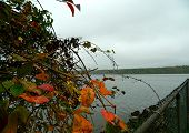 Fall leaves overlooking the lake
