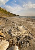 Fossil Hunting On The Dorset Coastline