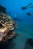 Divers,coral And Ocean