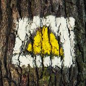 Yellow Hiking Sign On The Tree