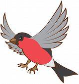 Flying bullfinch opened wings