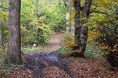 Hiking Path In The Autumn Deciduous Forest
