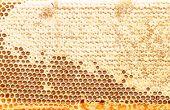 Fresh Honeycomb Textured Background
