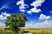Tree In Countryside Landscape Under Blue Sky With Clouds, Italy