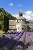 Abbey Of Senanque And Lavender Field