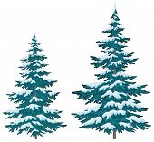 Christmas trees under snow
