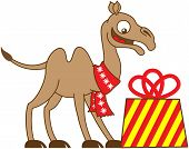 Cool camel receiving a Christmas gift