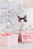 Cute little cat sitting with gifts near Christmas tree