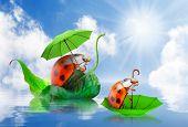 Rainy day in nature. Little ladybugs with umbrella floating on spring flood.