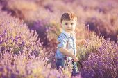 Toddler cute boy playing in a lavender field