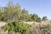 pic of vegetation  - Vegetation - JPG