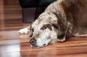 stock photo of dog-house  - Sad face old spotted dog resting inside