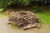picture of osprey  - Replica Osprey nest built to model those found in trees in wooded area - JPG