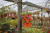 picture of greenhouse  - Greenhouses  - JPG