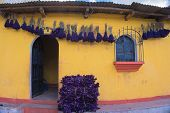 pic of lent  - Purple flowers hung and drying with bundles of purple sprayed macadamia leaves used to celebrate Lent - JPG