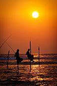 pic of fishermen  - Silhouettes of the traditional stilt fishermen at the sunset near Galle in Sri Lanka - JPG
