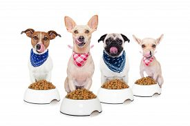 stock photo of sticking out tongue  - row of dogs as a group or team all hungry and tonge sticking out in front of food bowls isolated on white background - JPG