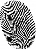 black ink fingerprint on white background in vector