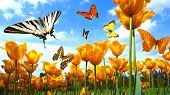 tulips with butterflies