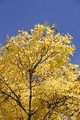 Autumn Foilage. poster