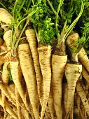 Parsley root vegetable