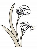 Isolated Calla Lily.Eps