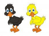 Duckling young baby duck vector cartoon