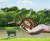 stock photo of harmless snakes  - Snake in your hand - JPG