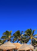 coconut palm tree under blue sky with hut palapa sun roof
