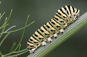 A colorful caterpillar of