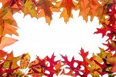 fall leaves frame on white background