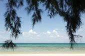 tropical beach and  filao pine tree hanging, ko laoliang, Thailand