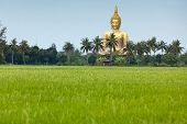 rice field  and wat muang giant buddha in angthong province, thailand
