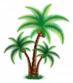 Tropical palm trees are on grass vector