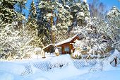 Beautiful Winter Landscape With Snow-covered Trees And A House In The Snow. Large Snow-covered Pine  poster