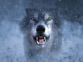 3d Rendering Of A Gray Wolf Looking Ready To Attack And Growling In The Middle Of A Snow Storm. poster