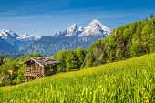 Panoramic View Of Idyllic Mountain Landscape In The Alps With Fresh Green Mountain Pastures, Flowers poster